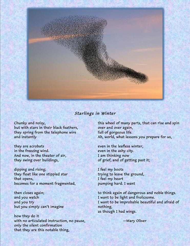 Mary Oliver murmuration